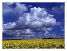 rape field by Hasche