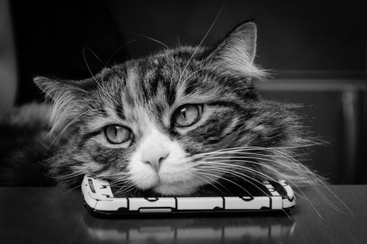 Nanati on mobile - Black and white by noiser84