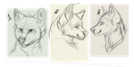 Canine YCHS -SET PRICE $5- ((OPEN 1/3)) by CoughingFish