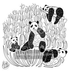 Giant panda (The Exotic Colouring Book) by megcowley