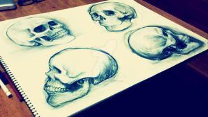 drawing skulls by AnnaThomas2012