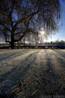 frosty by photo-earth