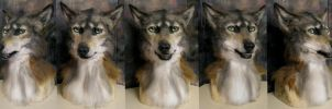 Coywolf by Crystumes