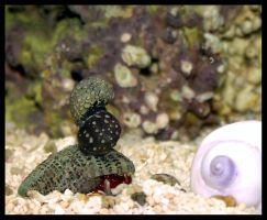 Snail Stack by Avaryc