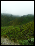 Green New Zealand by Mogrianne