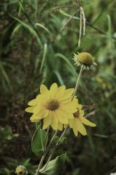 End of Summer Love by MMoreland