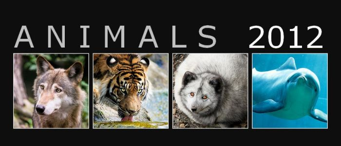 Animal photo calendar 2012 FOR FREE by woxys