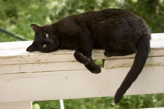 Black Cat 03 by deathbycanon-stock