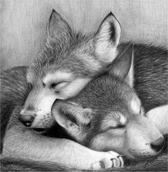 Pups wolf wolves by waderra