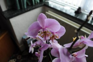 orchid 6 by density-stock