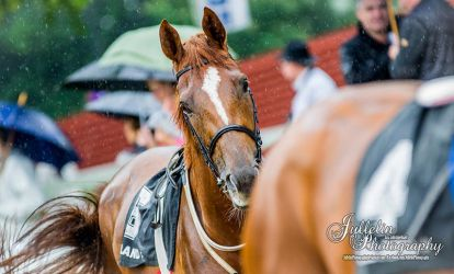 Horse Racing 553 by JullelinPhotography