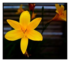 Bright Yellow Flower by Zochion