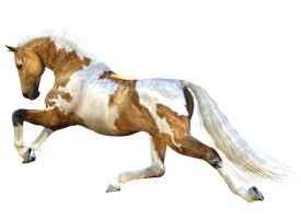 Horse 6 PNG by Variety-Stock