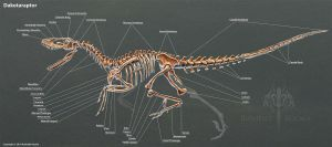 Dakotaraptor Skeleton Study by TheDragonofDoom