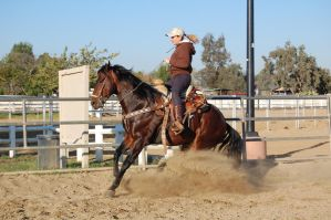 Reining horse in training by DancesWithPonies