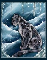 Snow Leopard by Chelsee