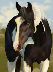 Wild Pinto by horsehaven95