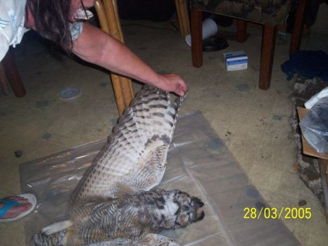 DEAD GREAT HORNED OWL 2 by heartunes