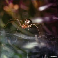 Little Creatures 078 by Frank-Beer