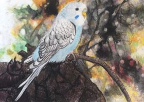 Budgie pastel painting by 7Esther7