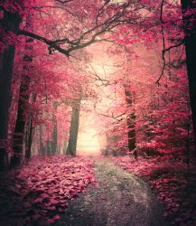 Pink forest II - premium stock by Aeternum-designs