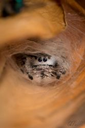 Spider lair by Chris-Pull