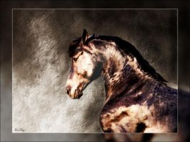 Friesian Portrait by Deirdre-T