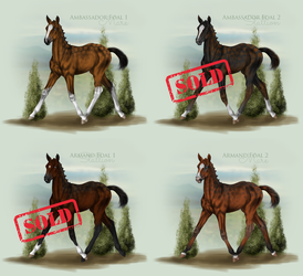 Ambassador and Armand Foal Auction Vol.2/14 by Tigra1988