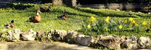 #Animales #Duck #Flowers by TitoCullen