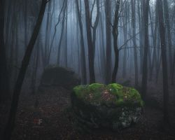 Spooky Forest by mescamesh