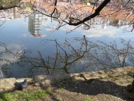 reflection spring ver by irenerei