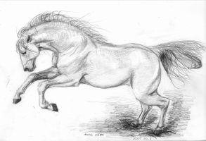 Andalusian stallion by silima13