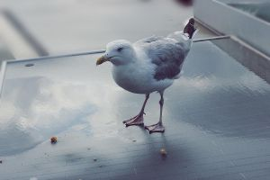 .: Seagull :. by Rare-Pearl