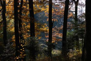 A walk in the autumn forest.. by 7DS7