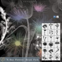 'X-Ray Flowers' Brush Pack by flashtuchka