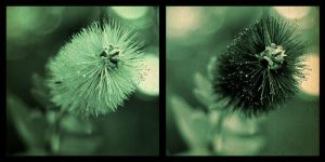 2 green flowers by to3oths