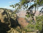 Trees within the canyon view by LandscapesNSuchPhoto