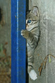 Playing Hide and Seek.... by thrumyeye