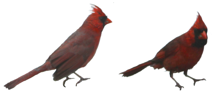 Cardinals by lonermade