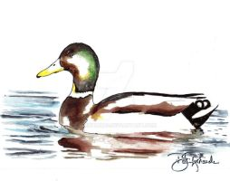 Watercolor - Duck by B-Richards