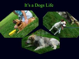 Dogs life by CorporalClown