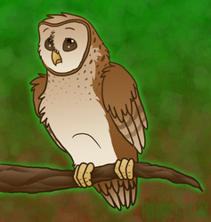 Barn Owl by therougecat