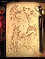 Canines - sketchbook pen by MIKECORRIERO