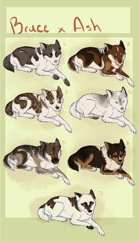 BrucexAsh-Huskey Pups :CLOSED: by Pockys-Kennel