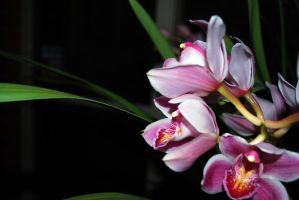 September Orchid by dpt56