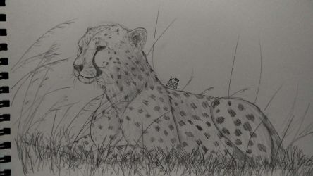 Cheetah practice - Cheetah strikes back by kosko99