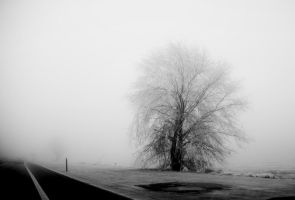 my tree 00 by metindemiralay