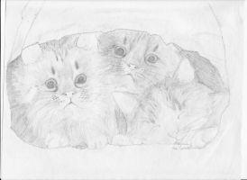 Kittens in a paper bag. by Abbiful