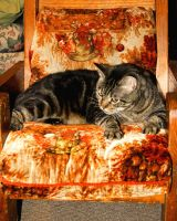 Fat cat in a little chair by Shadowhawk9973