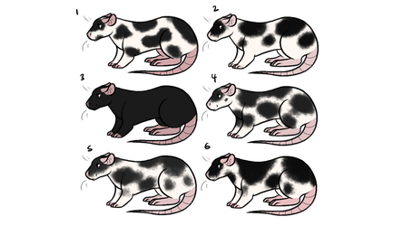 Rat pup adopts (5/6 OPEN) by Stripe13